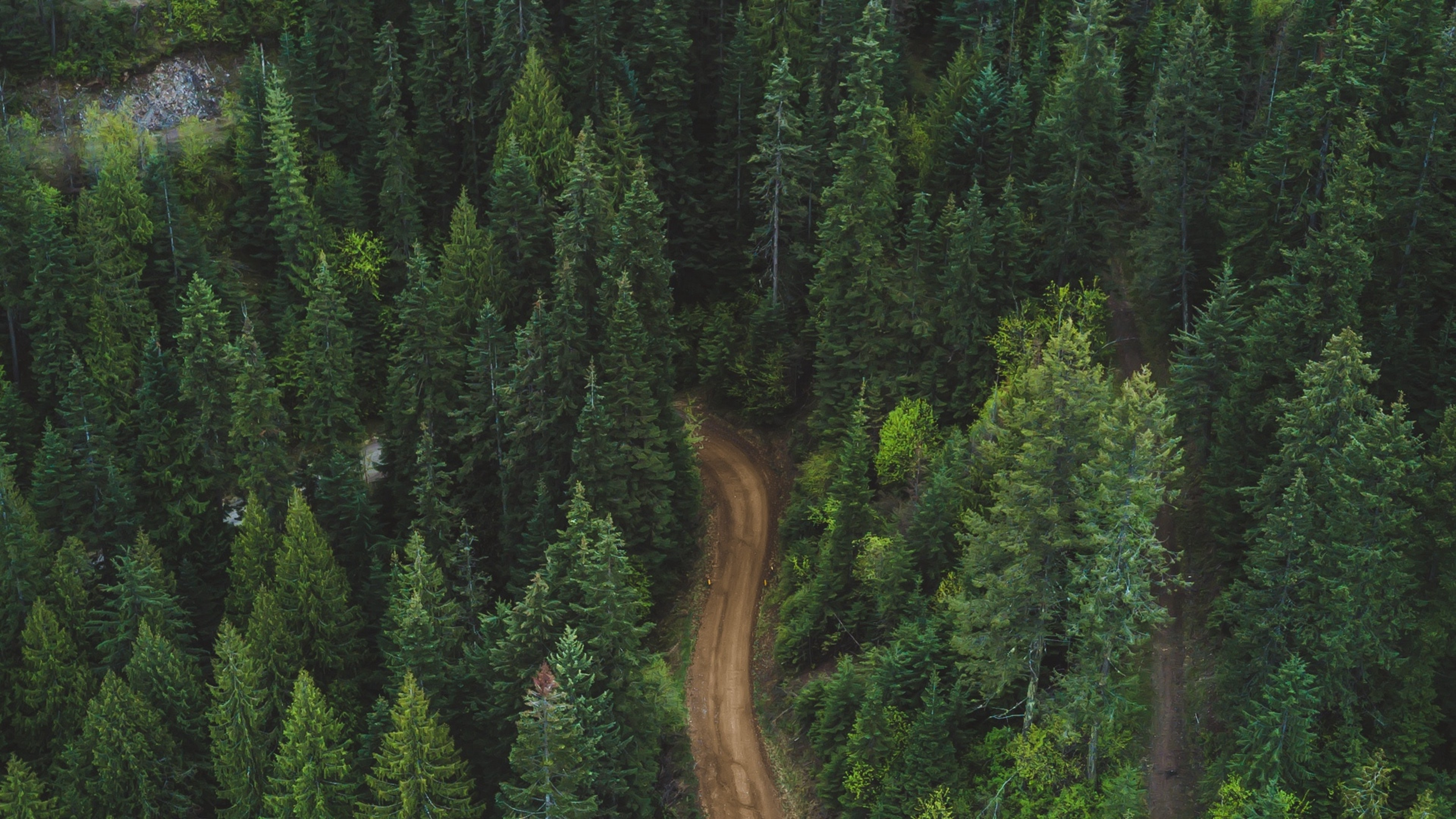 Aerial View Of A Road Inside The Forest Hd Wallpaper 4k Ultra Hd Hd Wallpaper Wallpapers Net