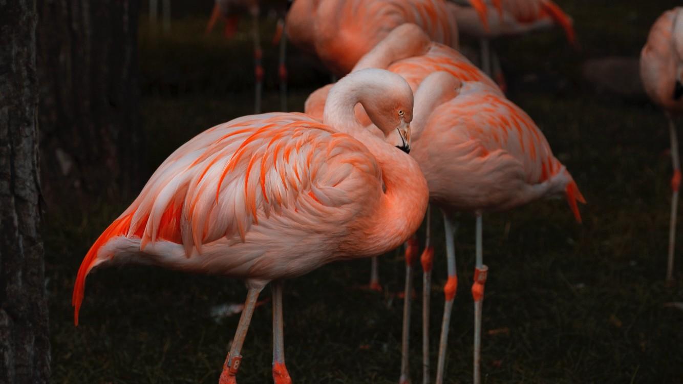 Amazing Flamingos Hd Wallpaper Iphone 7 Iphone 8 Hd