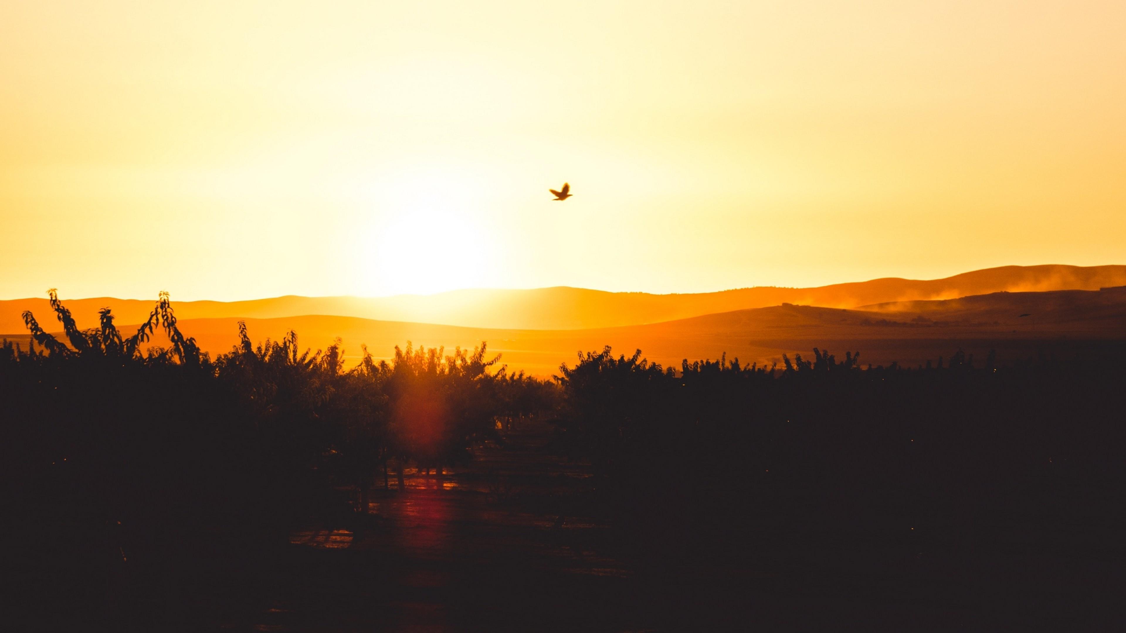 Bird Flying During The Sunset Hd Wallpaper 4k Ultra Hd Hd
