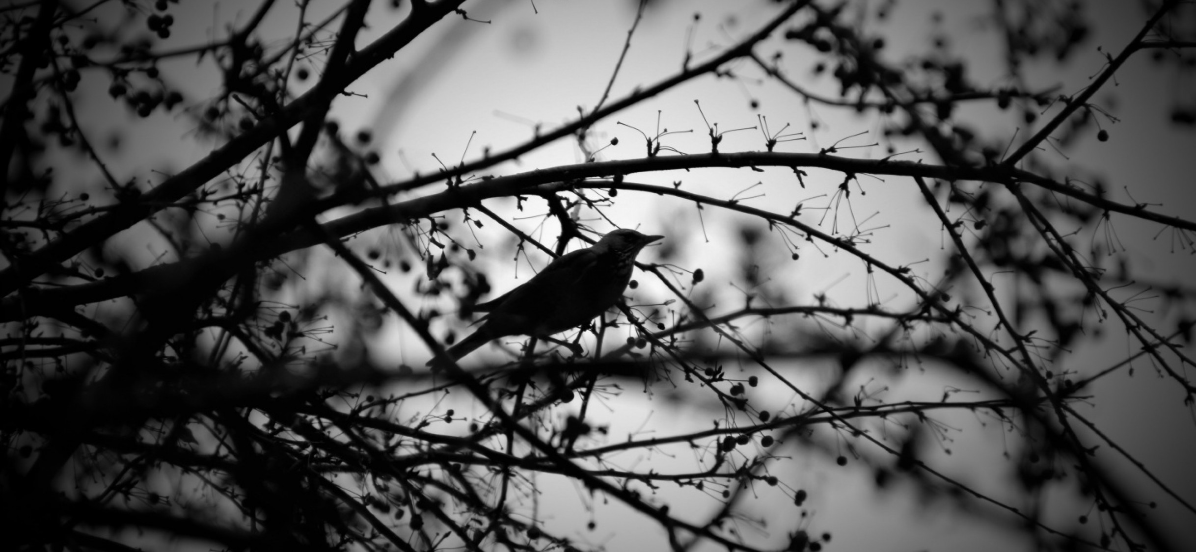 Black And White Bird And Tress Wallpaper For Desktop And