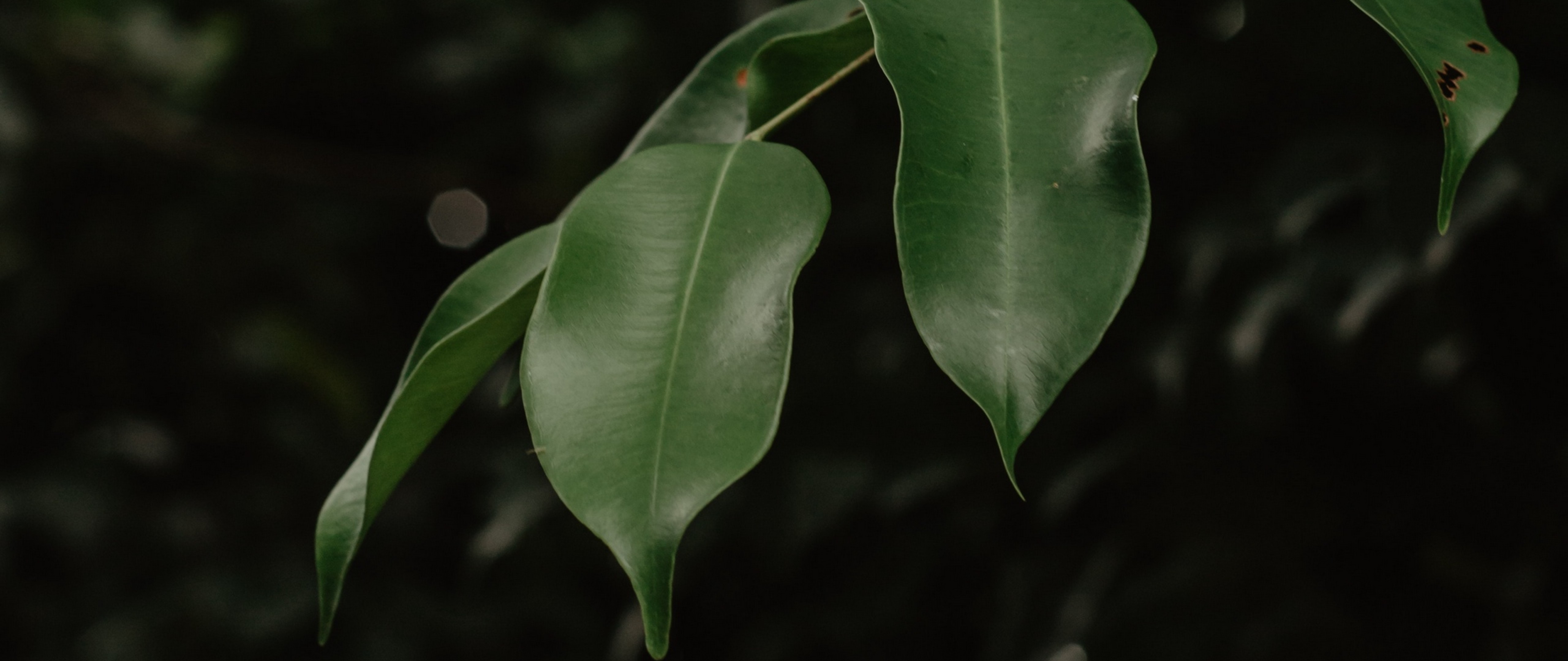 Branch Of Green Leaves Hd Wallpaper 4k Ultra Hd Wide Tv Hd