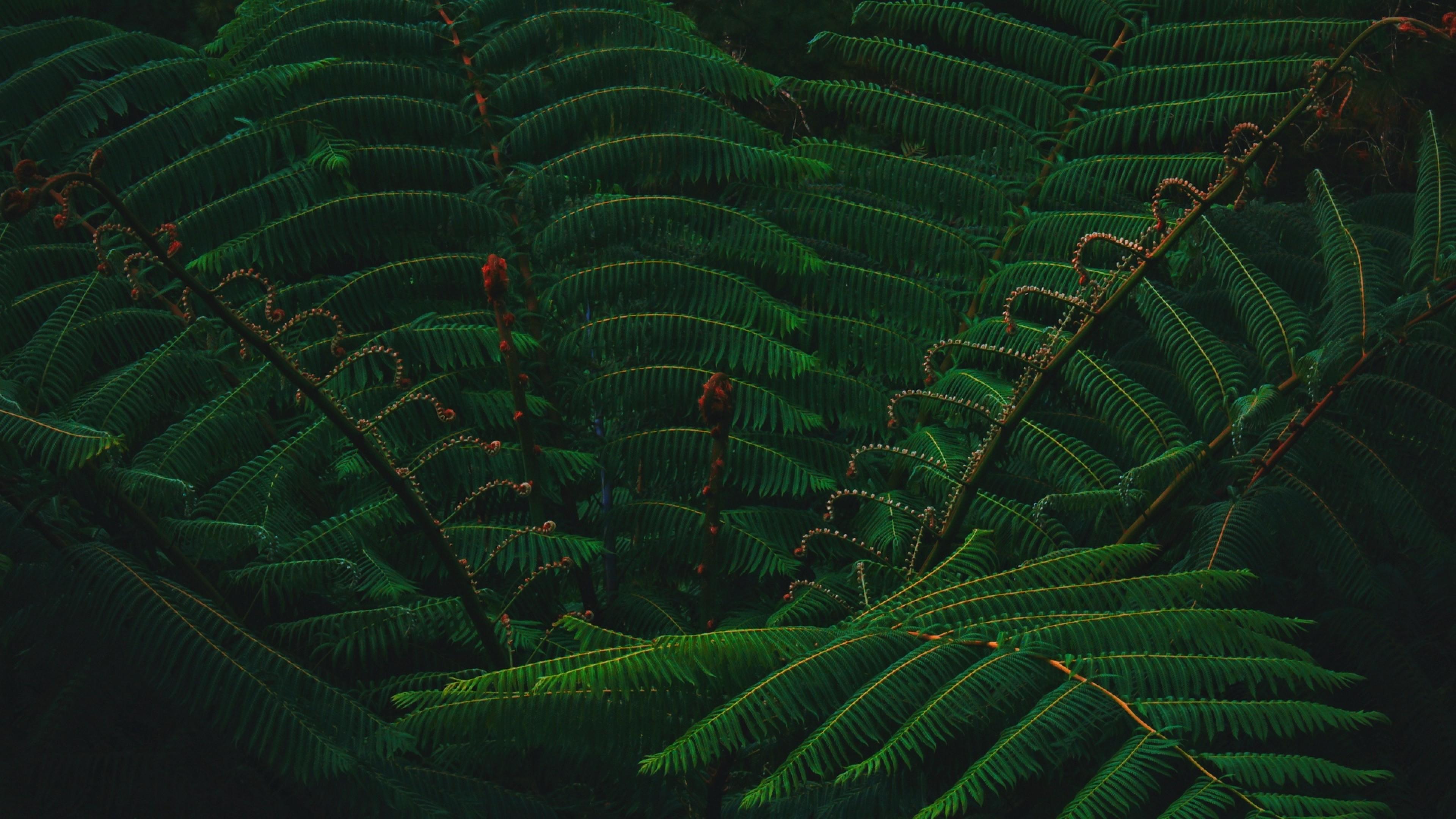 Branch Of Green Tree Leaves Hd Wallpaper 4k Ultra Hd Hd Wallpaper Wallpapers Net