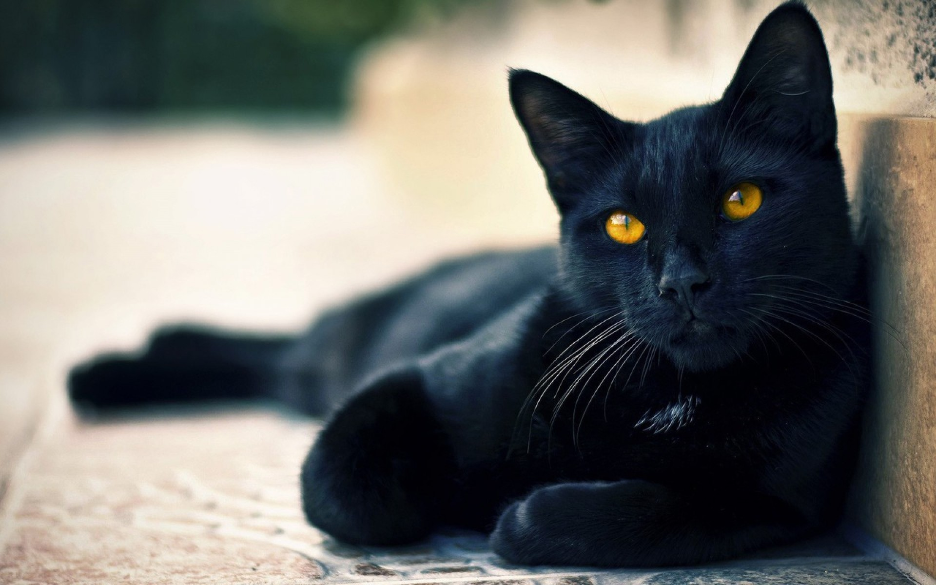 Cute Black Cat Halloween Hd Wallpaper For Desktop And