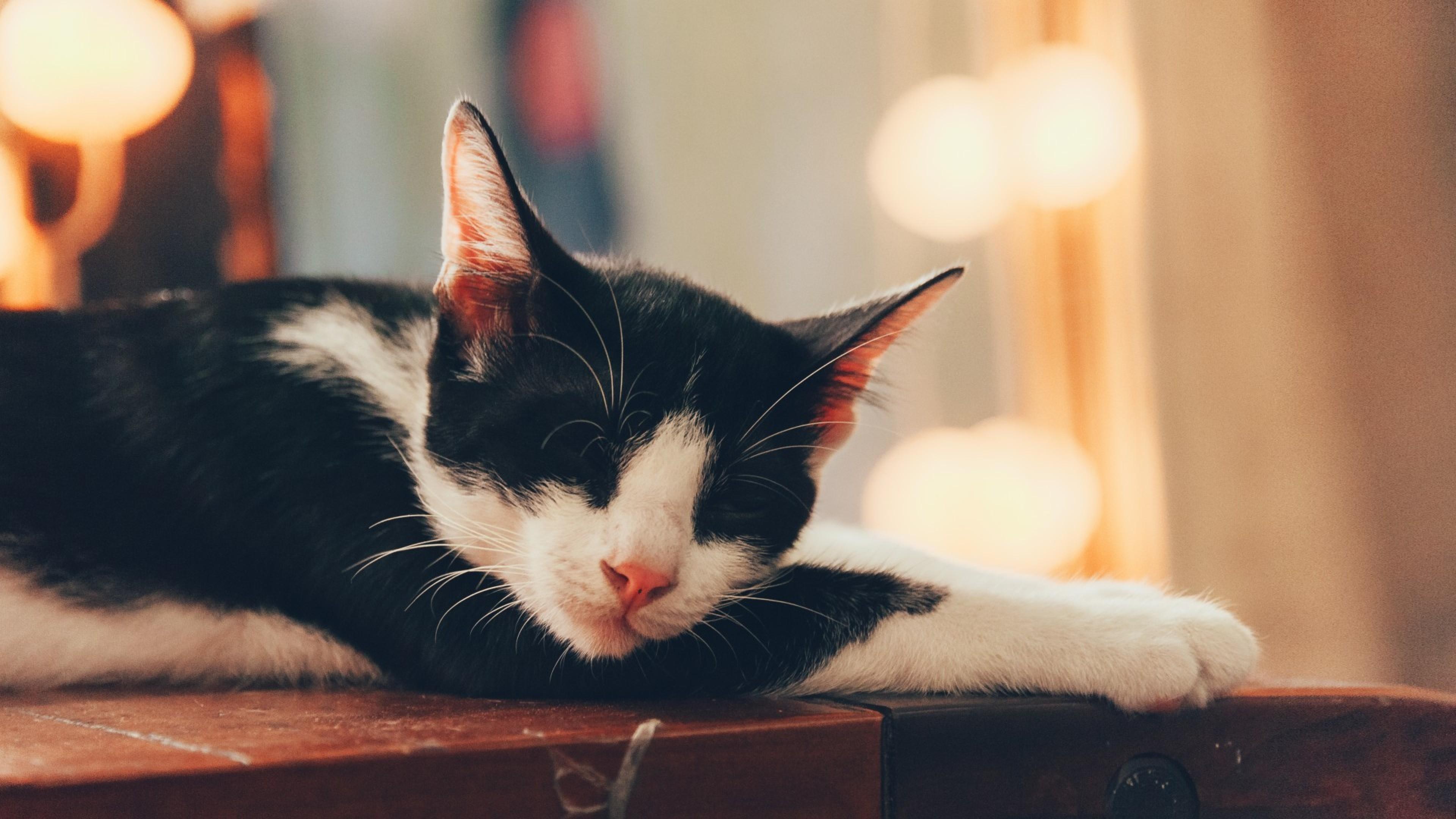 Cute Cat Sleeping Hd Wallpaper 4k Ultra Hd Hd Wallpaper Wallpapers Net