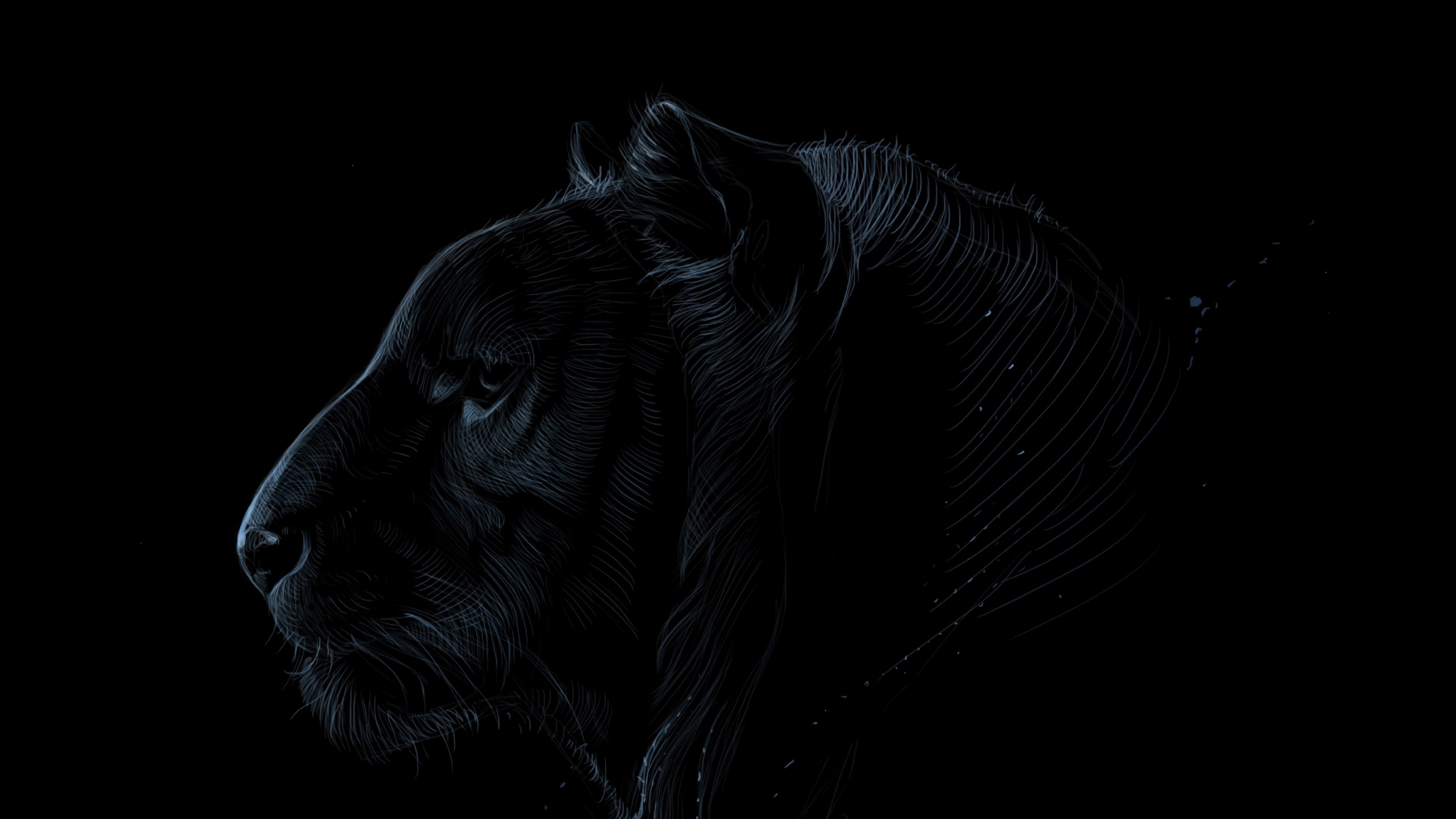 Dark Tiger Face Hd Wallpaper 4k Ultra Hd Hd Wallpaper Wallpapers Net