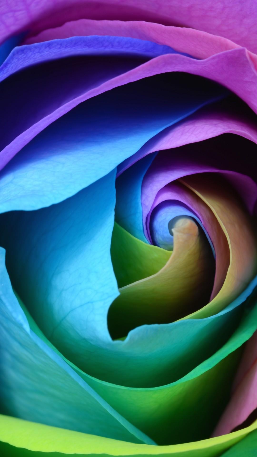 Download Free Hd Beautiful Rose Flower Wallpaper Iphone 6 6s Plus
