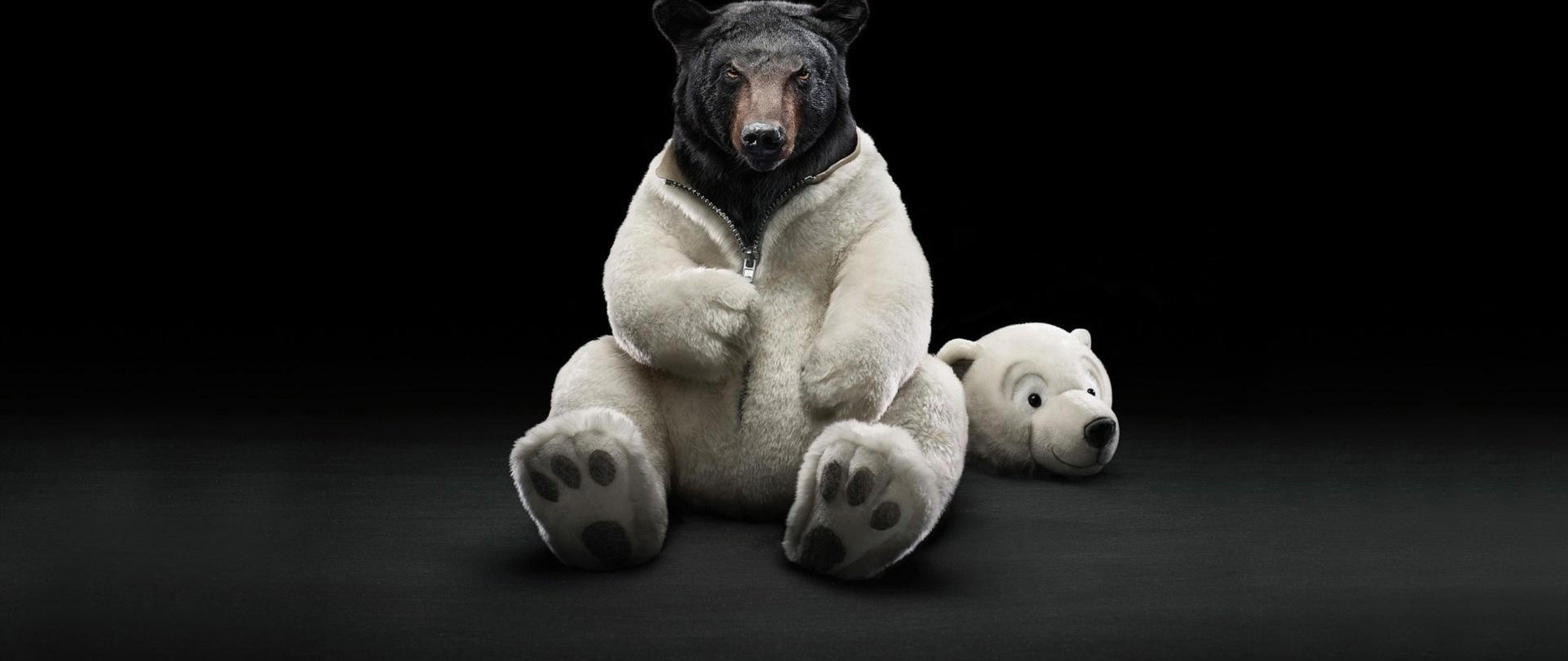 Funny Bear Hd Wallpaper 4k Ultra Hd Wide Tv Hd Wallpaper