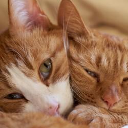 Funny Cats Sleeping In Weird Position Hd Wallpaper Google