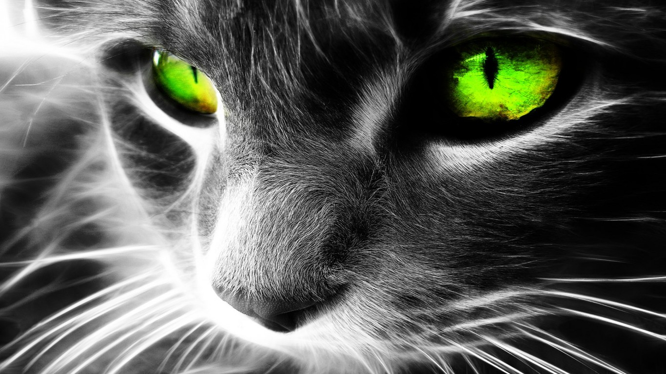 Green Eyes Cat Wallpaper For Desktop And Mobiles 1366x768 Hd Wallpaper Wallpapers Net