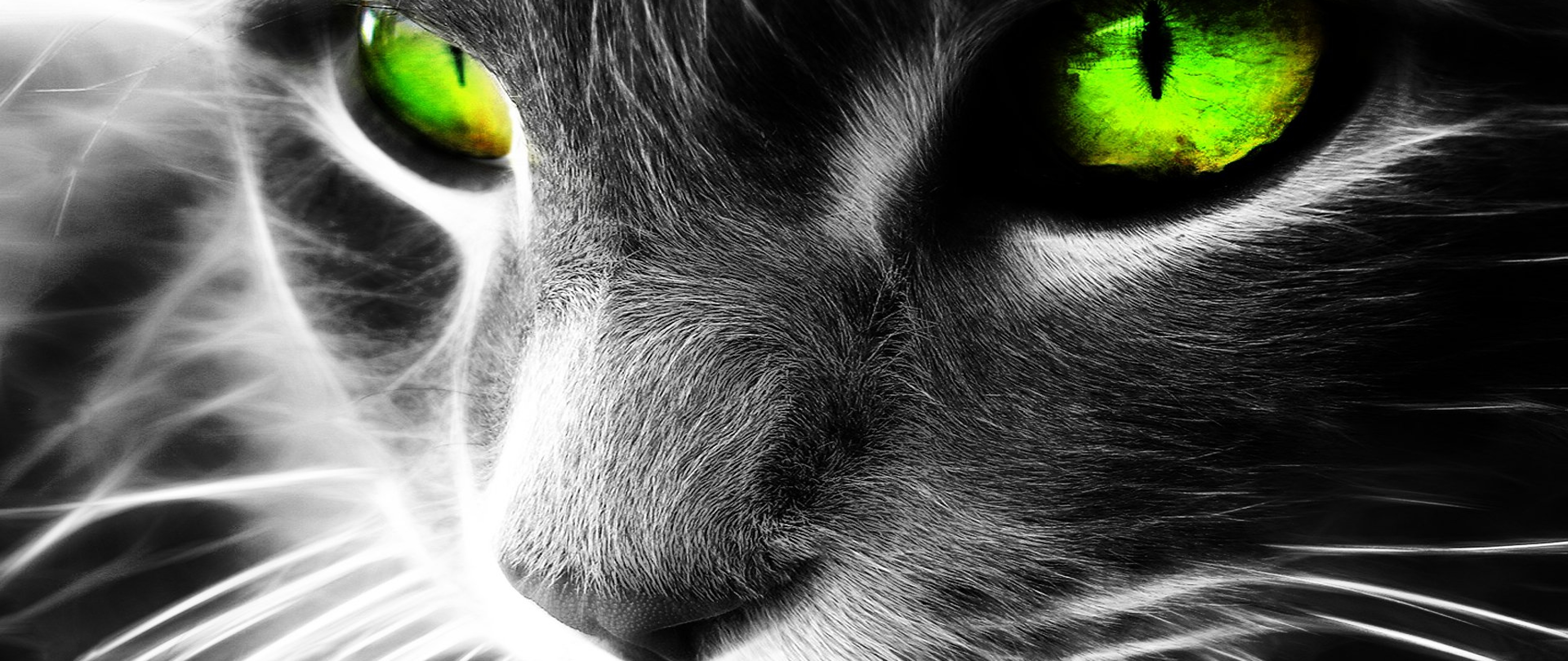 Green Eyes Cat Wallpaper For Desktop And Mobiles 4k Ultra Hd Wide Tv Hd Wallpaper Wallpapers Net