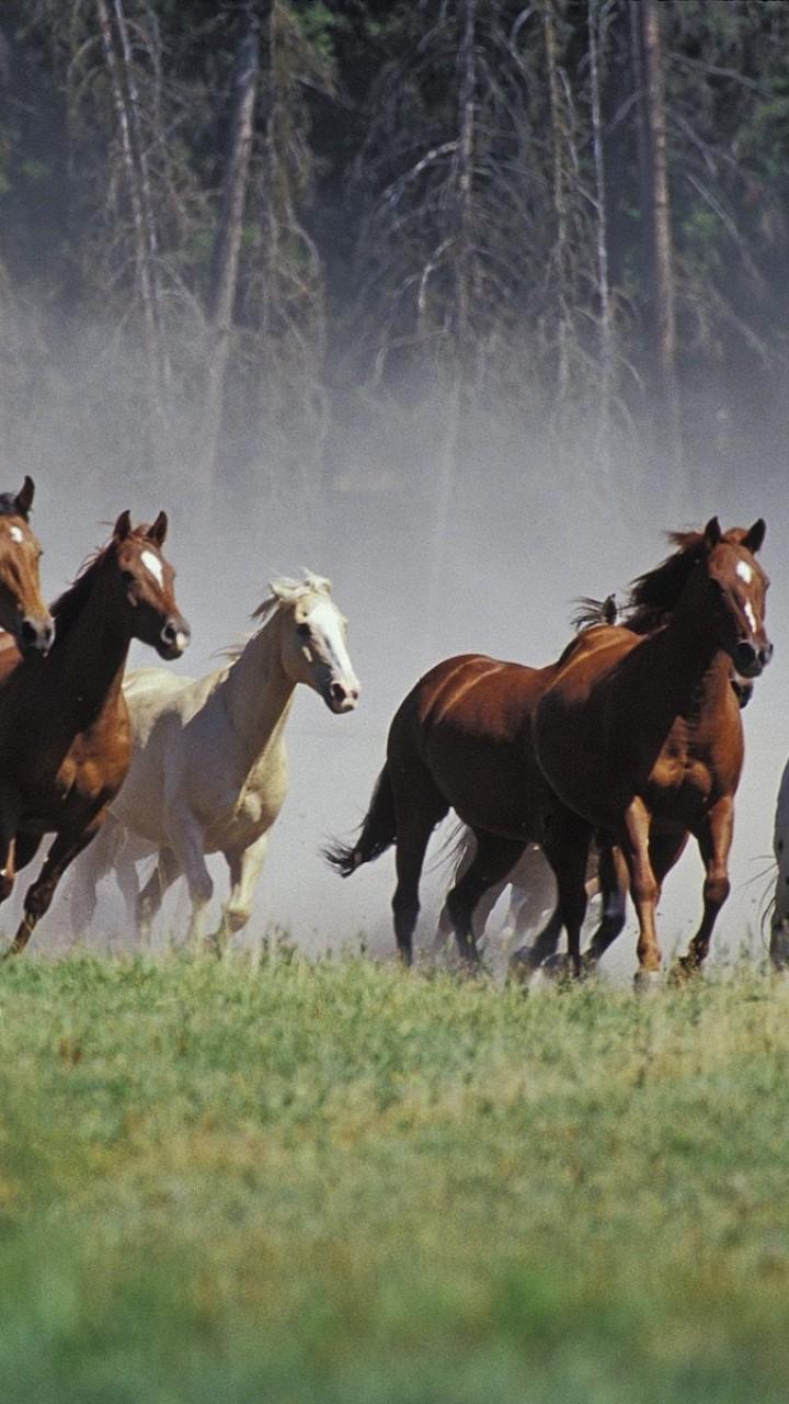 Wallpaper Hd Horse 7