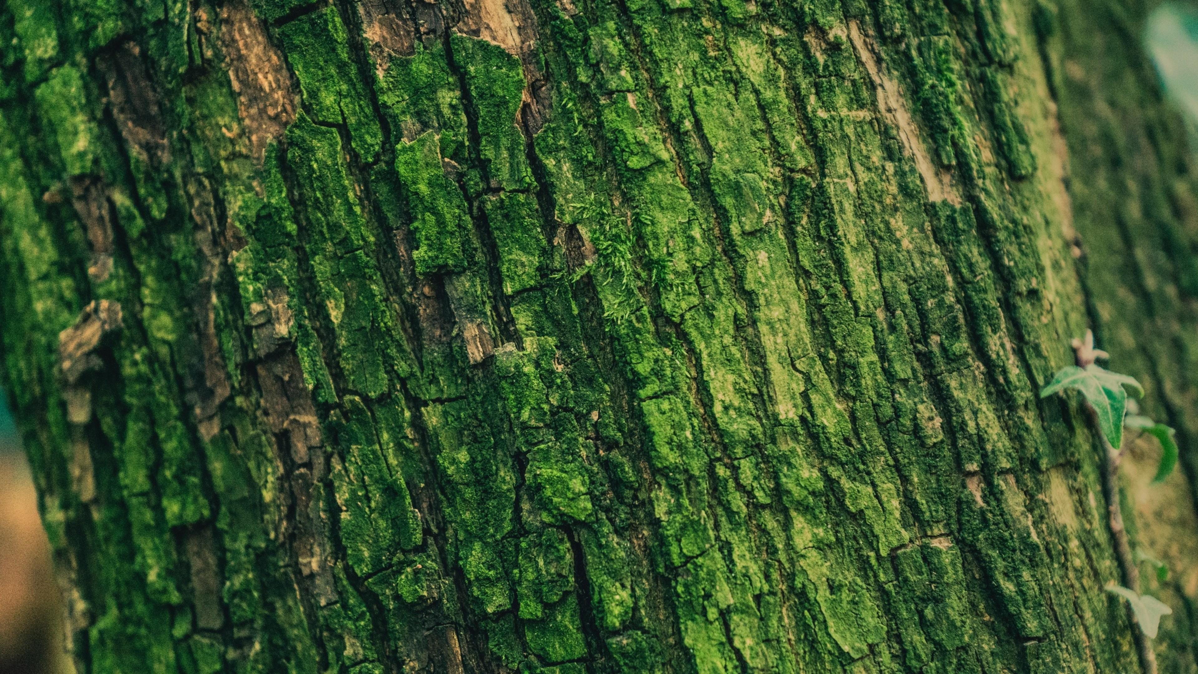 Tree With Green Bark Hd Wallpaper 4k Ultra Hd Hd Wallpaper Wallpapers Net