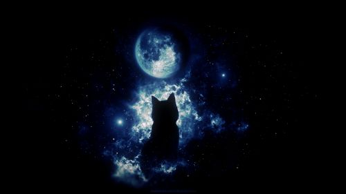 Anime cat staring at the moon HD Wallpaper