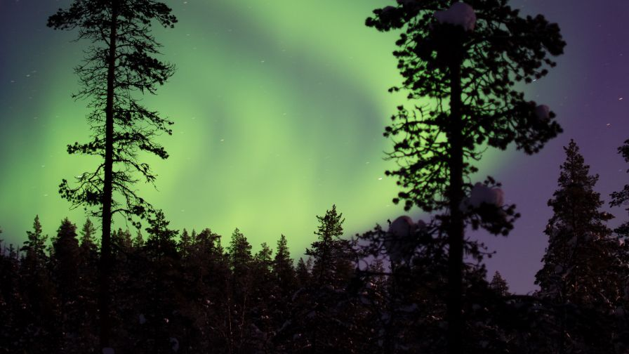 Aurora over a forest HD Wallpaper
