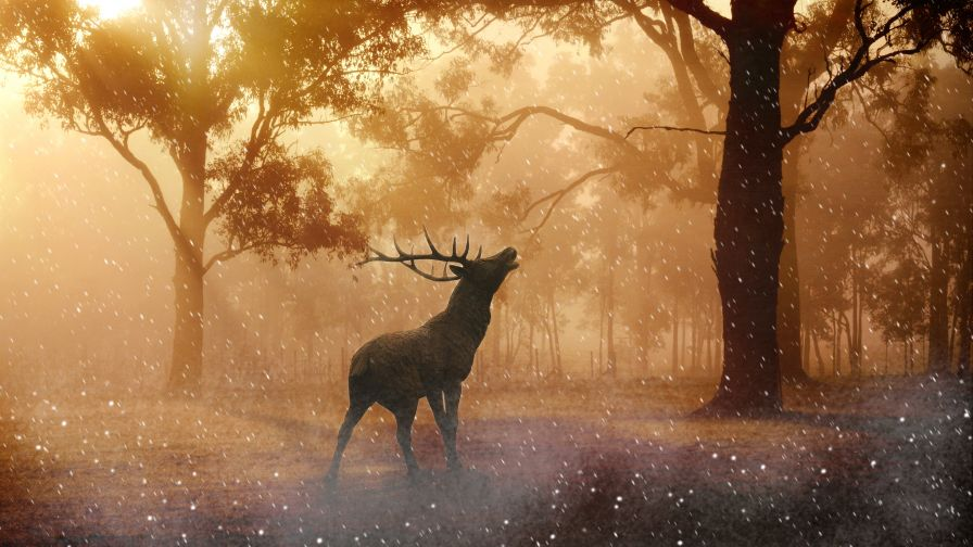 Beautiful Fallow Deer in Forest Autumn Wallpaper