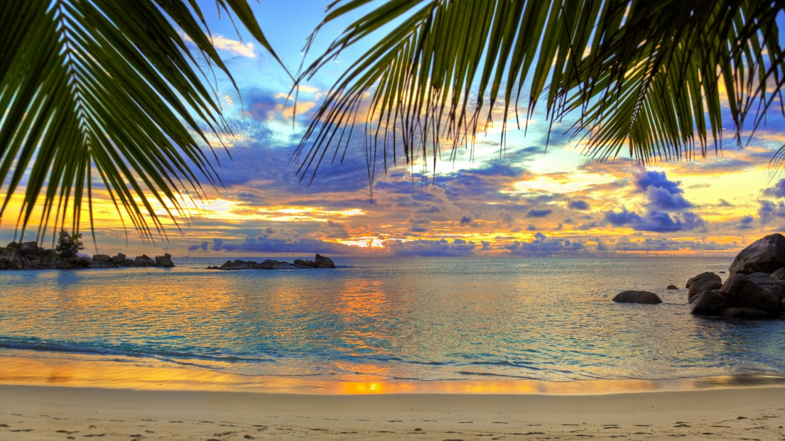 Beautiful palm trees at the beach HD Wallpaper