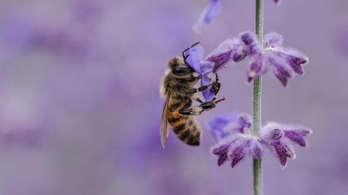 Bee standing in a lilac flower HD Wallpaper