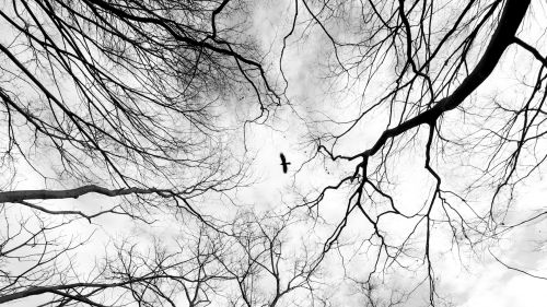 Bird flying through the trees HD Wallpaper