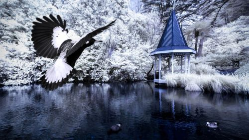 Bird Soaring Towards a Gazebo