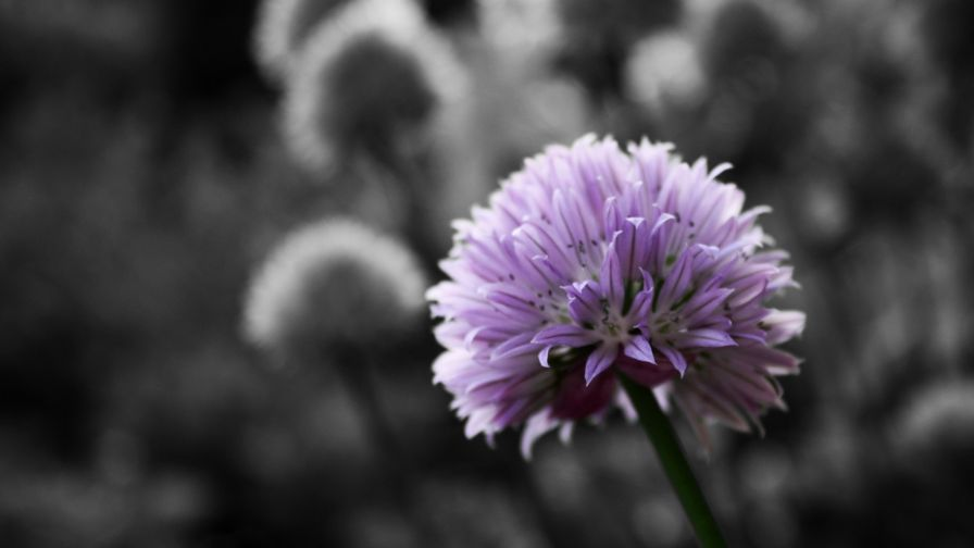 Black And White Flowers HD Wallpaper