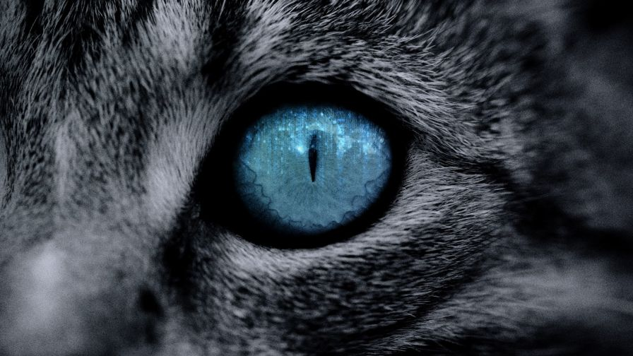 Blue Cat Eye Close Up HD Wallpaper