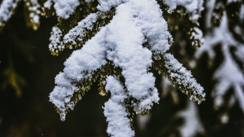 Blurry image of branches full of snow HD Wallpaper