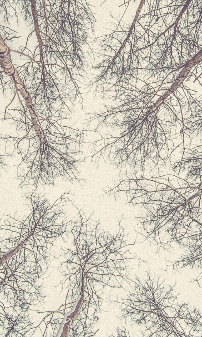 Bottom view of tree branches HD Wallpaper