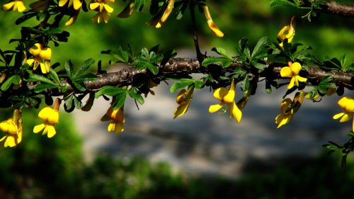 Branches With Yellow Flowers HD Wallpaper