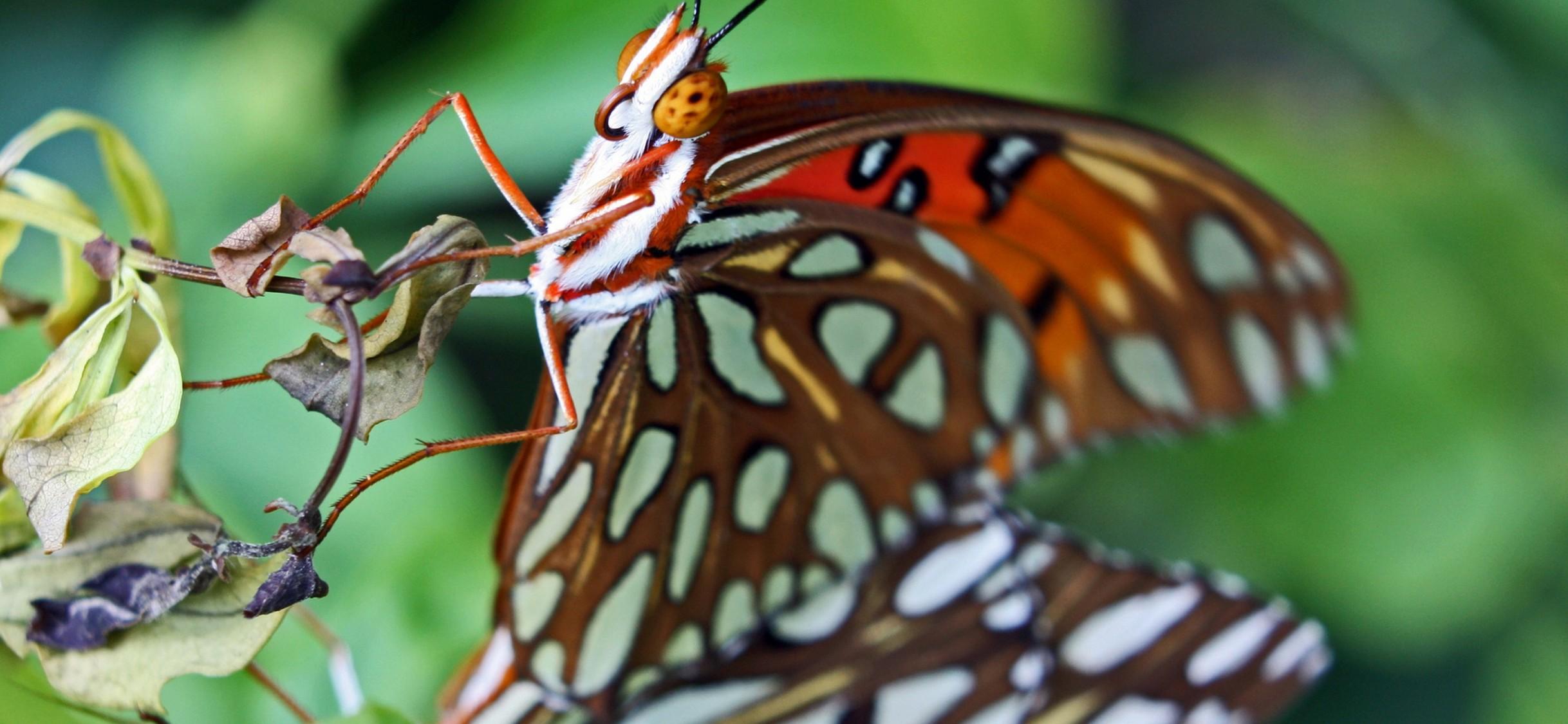 Butterfly Close Up Hd Wallpaper Iphone X Hd Wallpaper