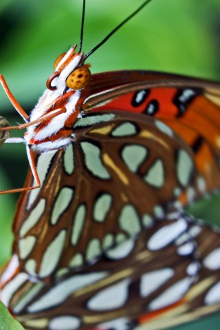 Butterfly close up HD Wallpaper