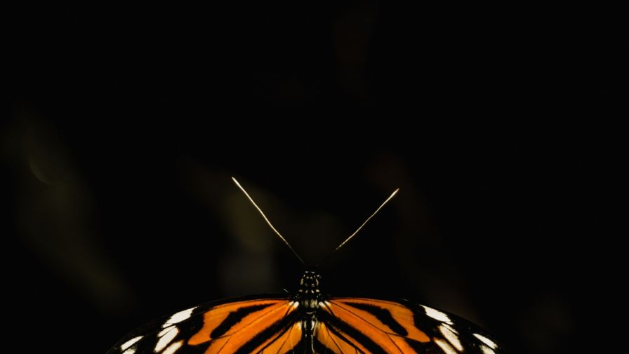 Butterfly wings close up HD Wallpaper
