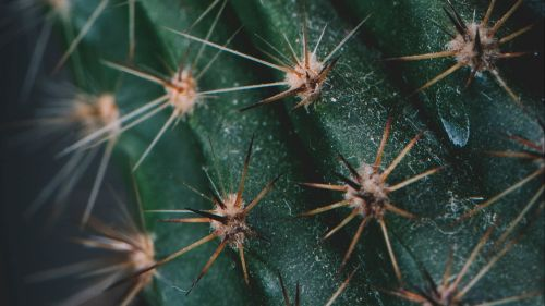 Cactus needles HD Wallpaper