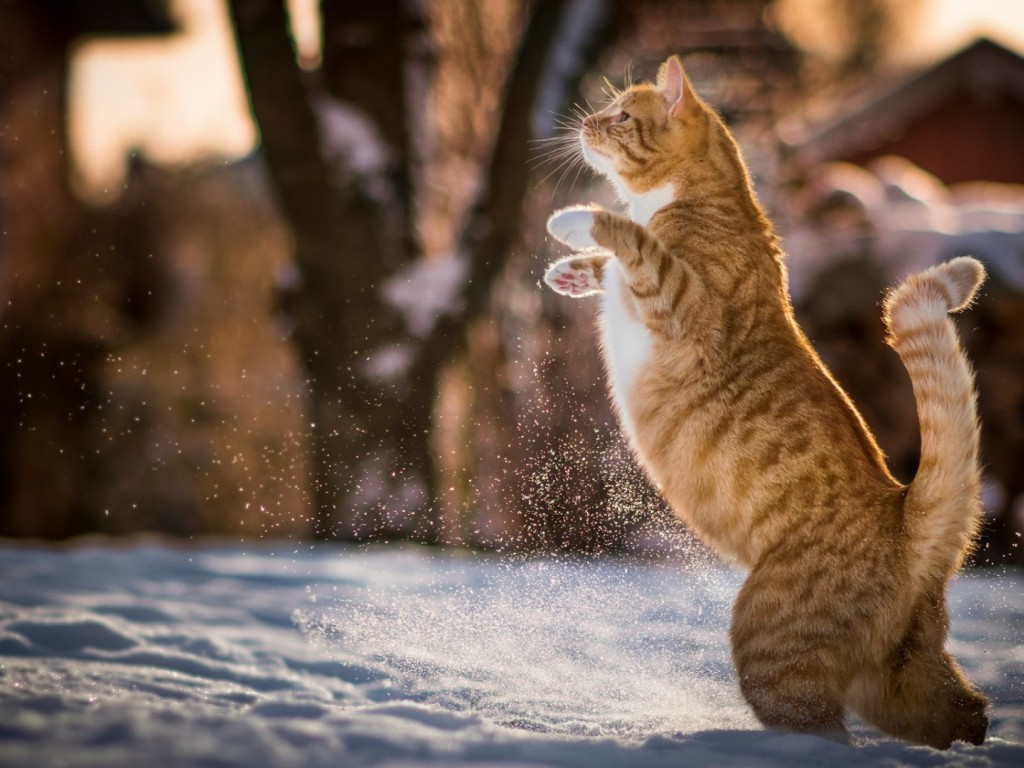 Cat playing at the snow HD Wallpaper