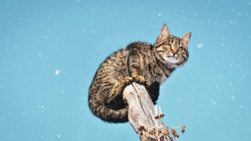 Cat standing on the tree HD Wallpaper
