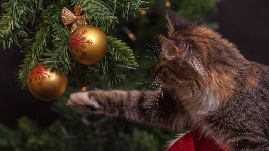 Cat Touch Gold Christmas Bauble HD Wallpaper