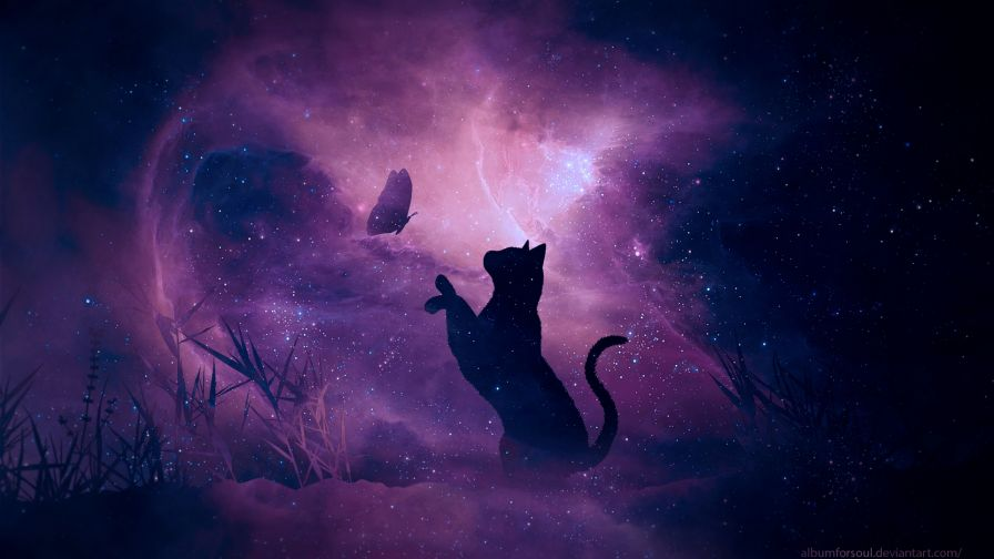 Cat trying to catch a butterfly HD Wallpaper