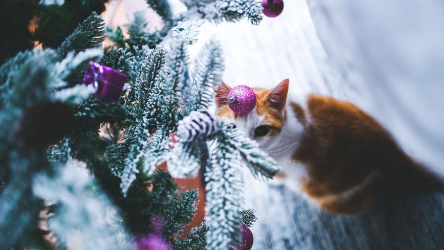 Cat under the Christmas Tree HD Wallpaper