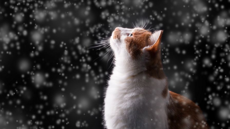 Cat watches the snow HD Wallpaper