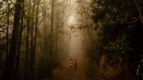 Children play on a fogy forest HD Wallpaper
