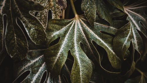 Closeup of carved plant leaves HD Wallpaper