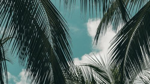 Clouds over tropical trees HD Wallpaper