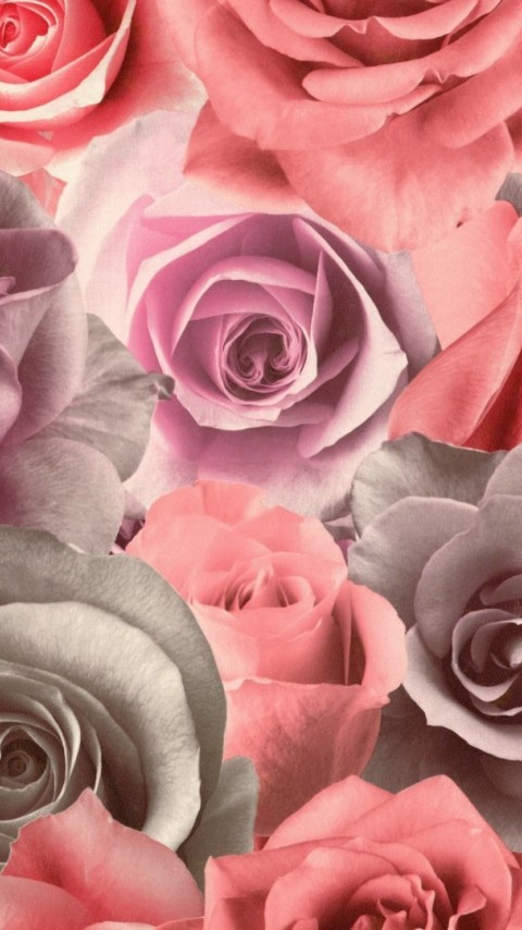 Colorful roses HD Wallpaper