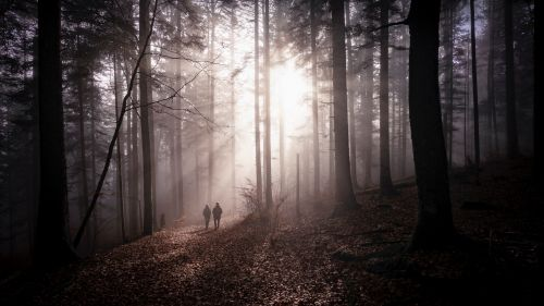 Couple silhouettes standing in a fogy forest HD Wallpaper