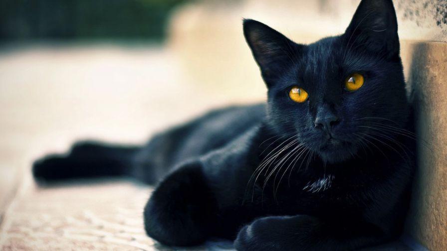 Cute Black Cat Halloween Hd Wallpaper For Desktop And Mobiles Wallpapers Net