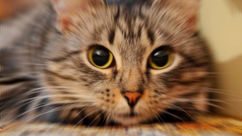 Cute Kitty HD Wallpaper