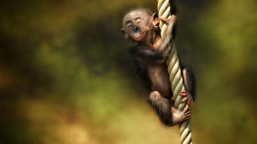 Cute Monkey HD Wallpaper
