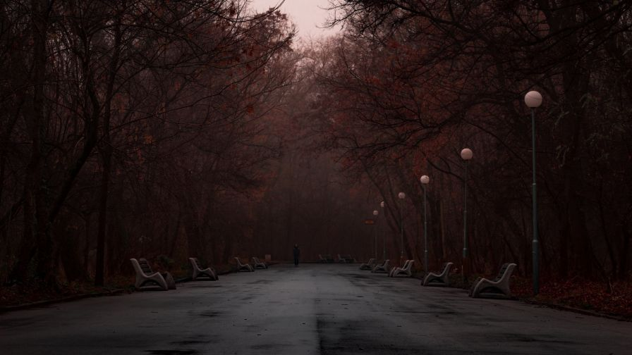 Dark foggy park HD Wallpaper