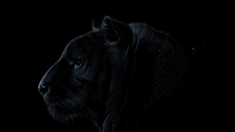 Dark tiger face HD Wallpaper