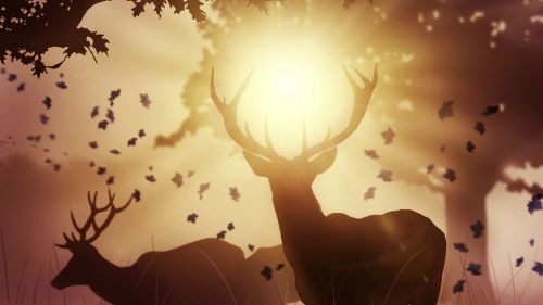 Deers at the sunlight HD Wallpaper