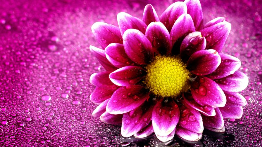 Download Free Small Pink flower Wallpaper
